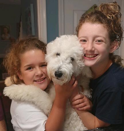 winnie goldendoodle blue ridge puppies for sale breeder