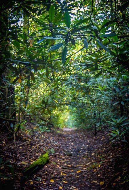 Warwoman Dell Nature Trail in Clayton, GA