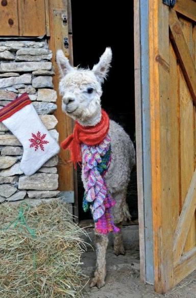 Apple Hill Farm Christmas Celebration
