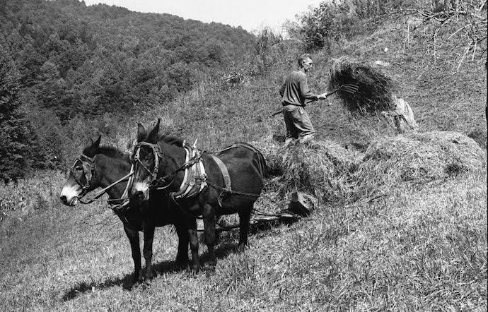 Appalachian Farmers working the land