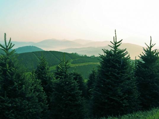 Cartner's Christmas Tree Farm