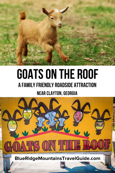 Goats On The Roof: Exploring a Family Friendly Fun Roadside Attraction Near Clayton GA |goats on the roof tiger ga | goats on a roof georgia | goats on the roof georgia | goats on the roof tiger georgia | north ga attractions | fun things to do in north georgia | unique things to do in north georgia | things to see in north georgia | north georgia tourist attractions | north georgia attractions family | north ga things to do | georgia roadside attractions | weird roadside attractions georgia | unique places to visit in georgia | american roadside attractions