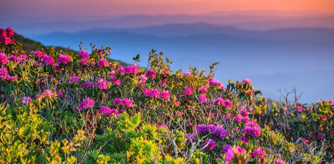 Wildflowers in GA