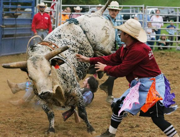 Rodeo clowns move in to get the kicking bull away from the downed rider.