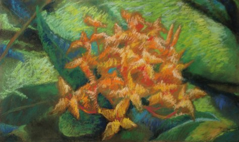 "Ixora, 12""x23"", pastels on board, © 2013 Donna Grandin"