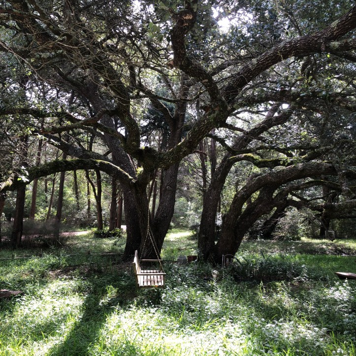 large shade tree with swing