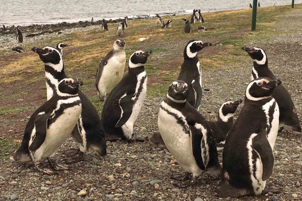 Patagonia Series Ep9: Say hello to the penguins in Punta Arenas