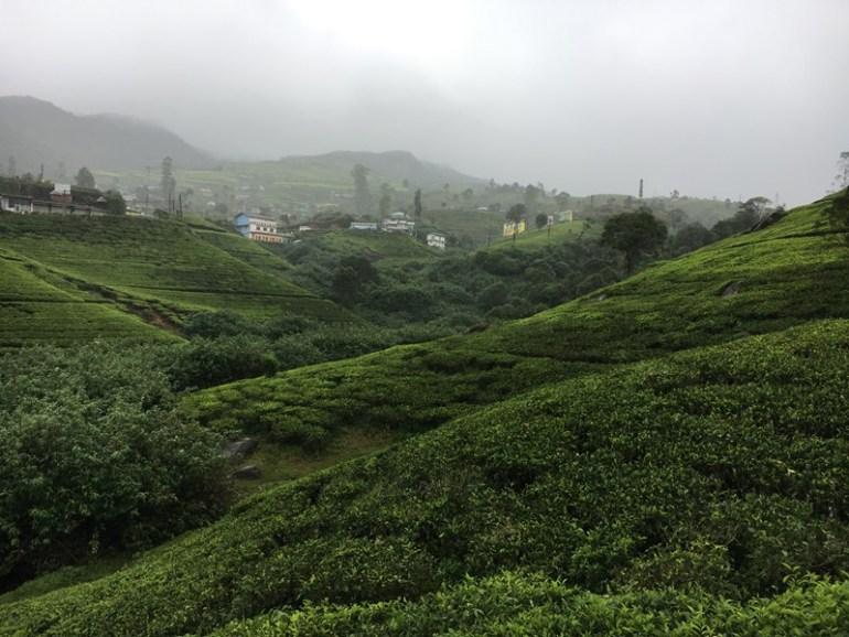 Tea plantation in Nuwara Eliya, Sri Lanka, Blue Sky and Wine