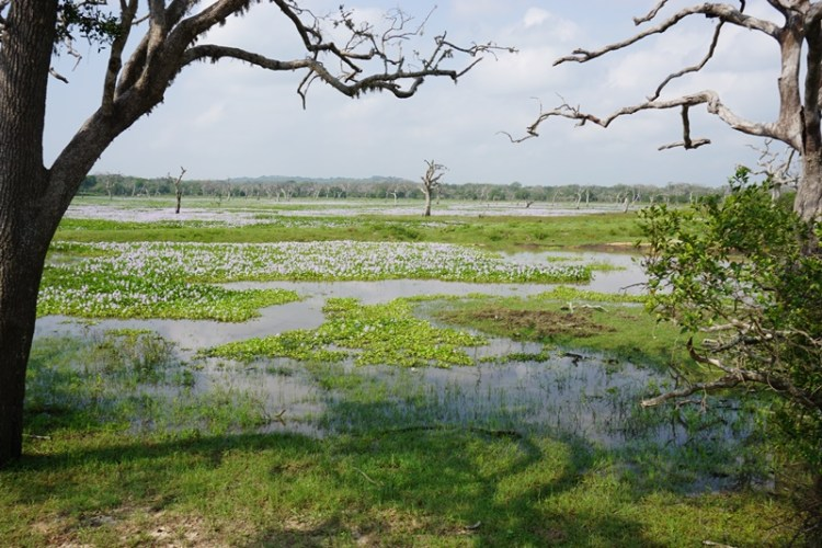 Yala National Park Safari, Tissamaharama, Sri Lanka, Blue Sky and Wine
