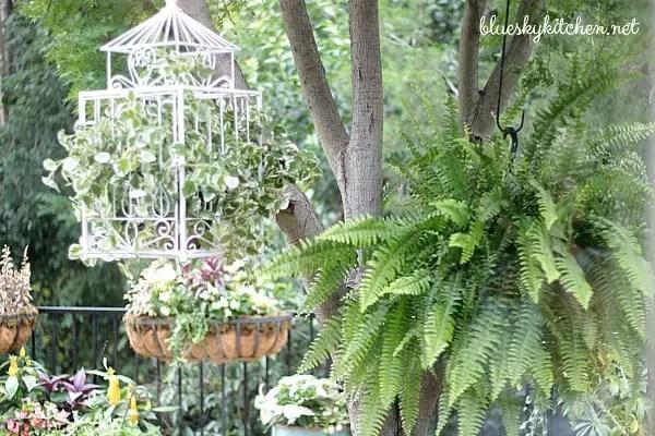 Estate Sale Bird Cage Becomes Backyard Planter