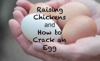 Raising Chickens and How to Crack an Egg