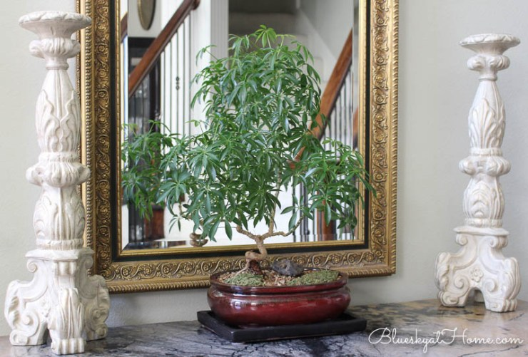 green plants in home decor