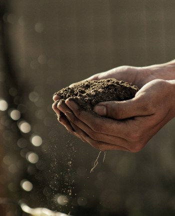 cupped hands holding healthy soil
