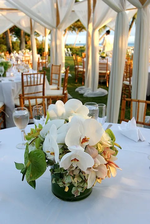 White Orchid flowers for Maui wedding
