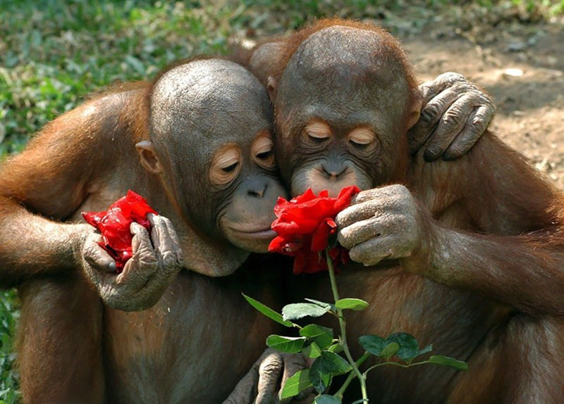 two monkeys stop and smell the flowers