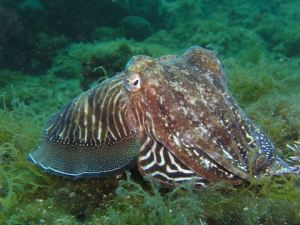 2018-12-26 20_41_37-octopus public domain - Google Search