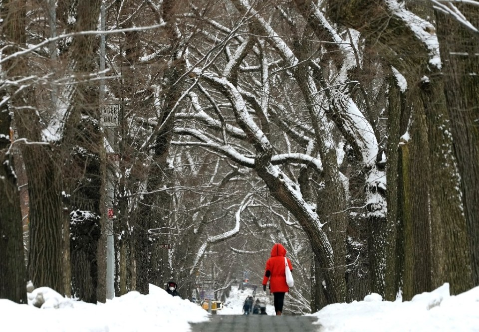 A tree-lined street near Central Park in New York's Manhattan after a snow storm last week - TIMOTHY A. CLARY / ©AFP