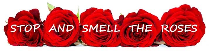 Image result for stop smell the roses