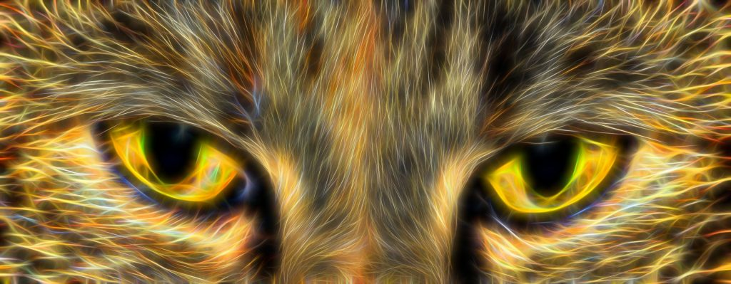 Golden cat eyes