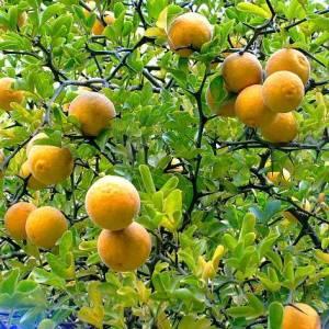 Agrumes et fruits du monde