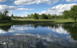 BlueWoods blauw kamperen in het Groene Woud