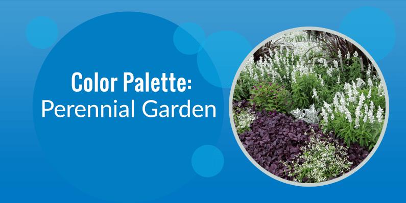 Color Palette: Perennial Garden