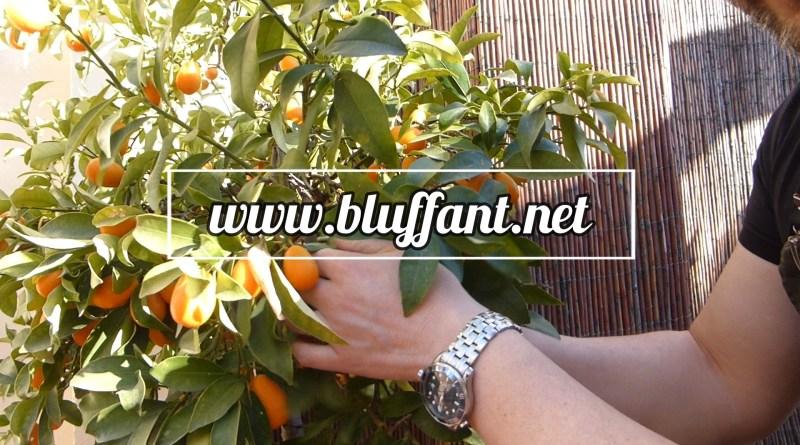 Magret de pato con kumquat, vainilla, avellana y guindilla