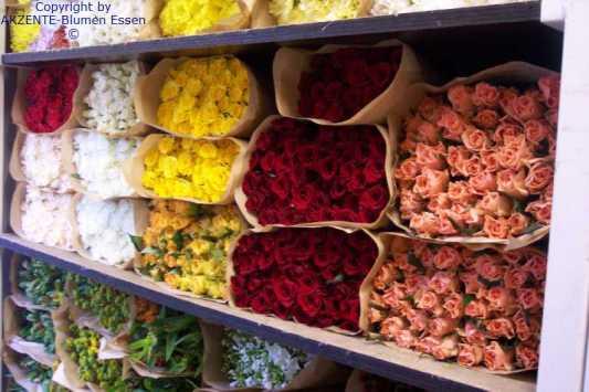 Blumen aus Holland und der Welt