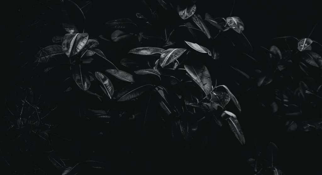 bnw_plant