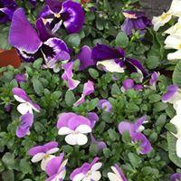 Pflanzen für innen und außen | Blumenhaus Inge