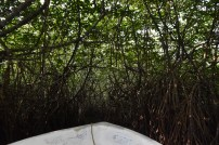 Sailing through the mangrove river - jungle