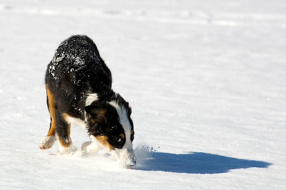Snow Coco