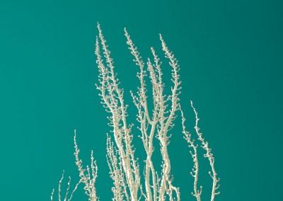 White Against Sky - Stuff White Trees Like   Blurbomat.com