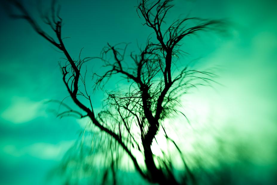 The Melting Tree