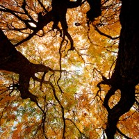 Up The Inside Out - autumn colors under a tree | Blurbomat.com