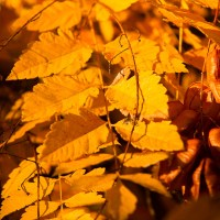 Slow Death of Autumn | Blurbomat.com