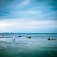 Beaks & Buoys - Isla Mujeres | Blurbomat.com