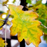 Requiem for Autumn | Blurbomat.com