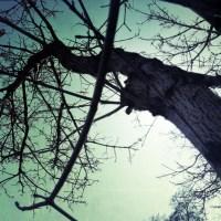 Grunge Tree | Blurbomat.com