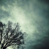 Dark Tree   Blurbomat.com