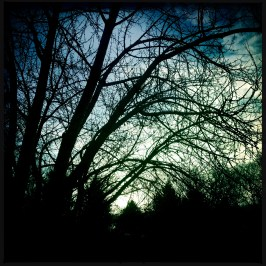 Hipstamatic Trees 10