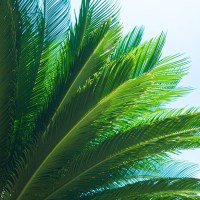 Fronds - Destin, Florida | Blurbomat.com