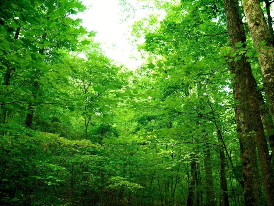 Arboretum Canopy