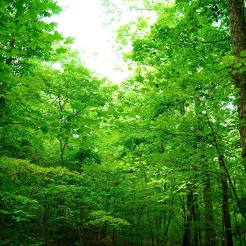 Canopy - Arboretum, near Knoxville, Tennessee | Blurbomat.com
