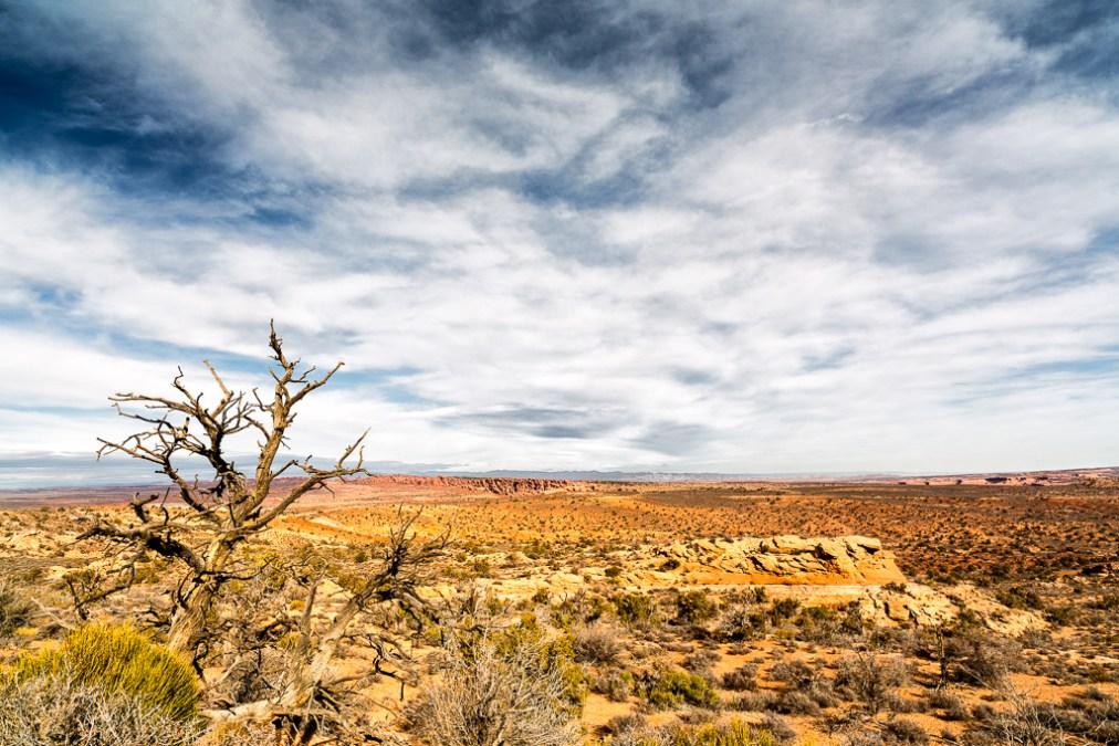 Bare Tree Desert Edition