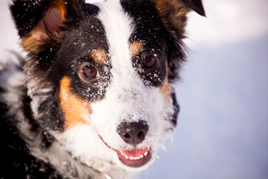Coco Smiles