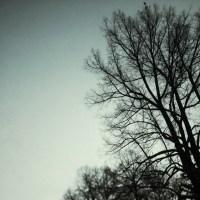 Frozen Tree   Blurbomat.com