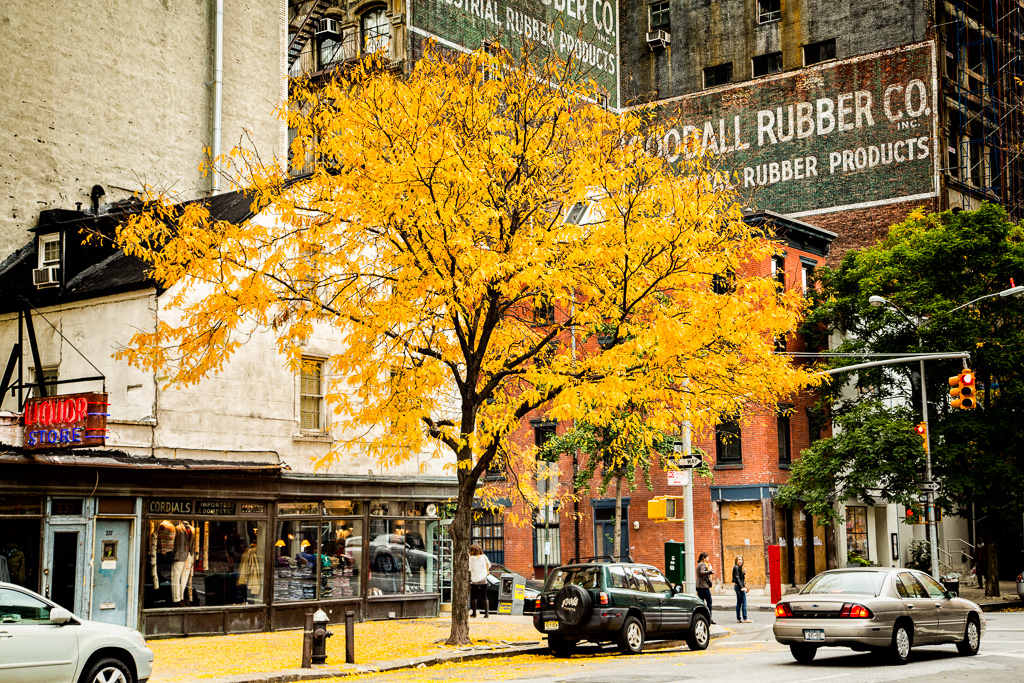 Yellow Leaf Day in Tribeca
