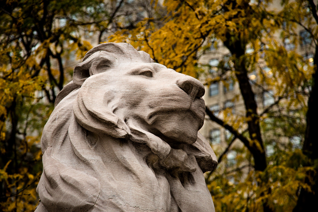 New York City Public Library Lion – Fortitude? Patience?