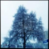 Blue Tree   Blurbomat.com